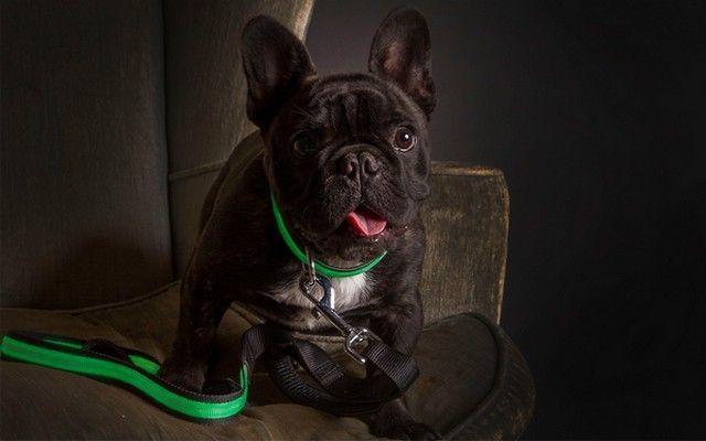 New-haut de gamme pour animaux produits Ligne allume pour garder les chiens Safe