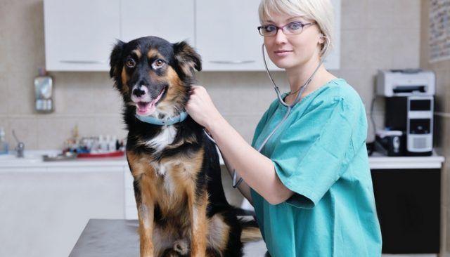 Nouveau dispositif high-tech fait énorme progrès en médecine vétérinaire