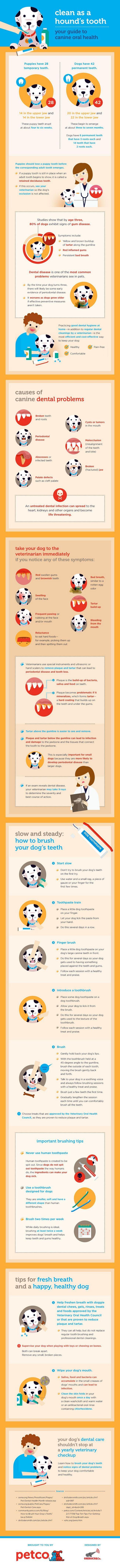Nouvelle infographie sur la santé bucco-dentaire canine de petco!