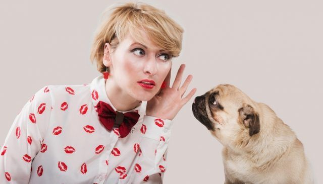 La nouvelle technologie pourrait voir des chiens communiquer avec nous à travers un jouet