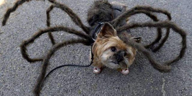 25 Halloween chien défilé de New York fait peur quelques chiens costumés adorables
