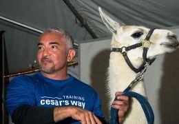 Cesar Millan avec son lama Lorenzo