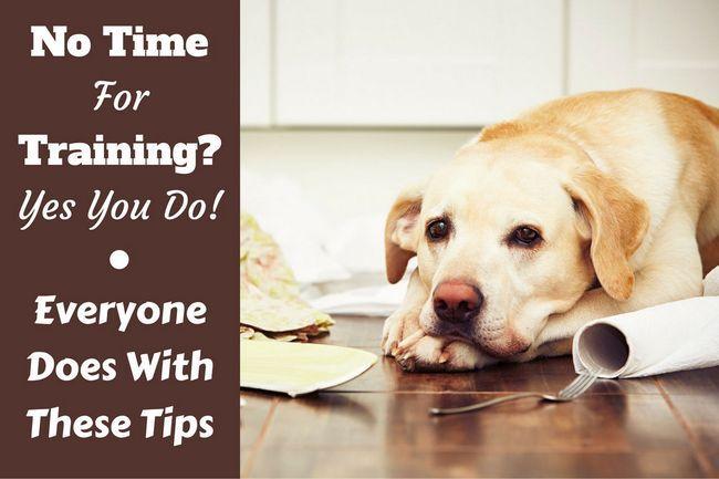 Pas de temps pour la formation de chien? Suivez ces conseils et techniques