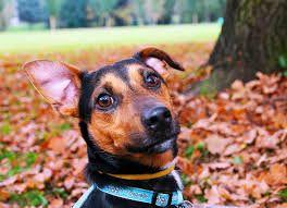 Meilleur Dog Ear Cleaner 2