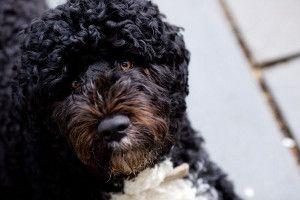 Obama: un second mandat ne comprend pas un deuxième chien