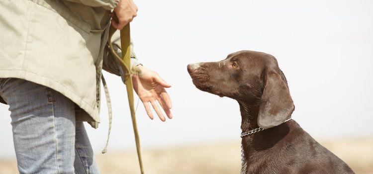 Op-ed: est votre chien un accro du jeu?