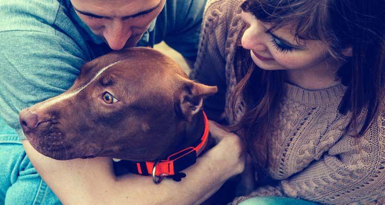 Op-ed: sérendipité et chiens
