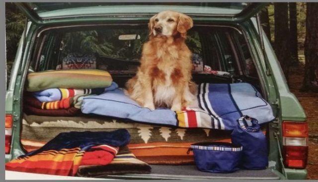 Pendleton célèbre parcs nationaux avec leur collection de vêtements pour chiens