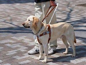 Pétition est encerclant pour sévir contre les faux service Produits pour chien