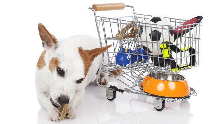 Animaux sur un budget: quel est le meilleur endroit pour acheter des fournitures de chien bon marché?
