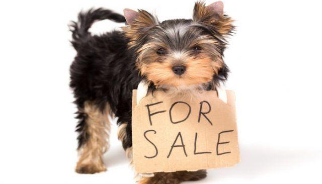 Philly dit non à la vente de chiots dans les animaleries et les marchés aux puces