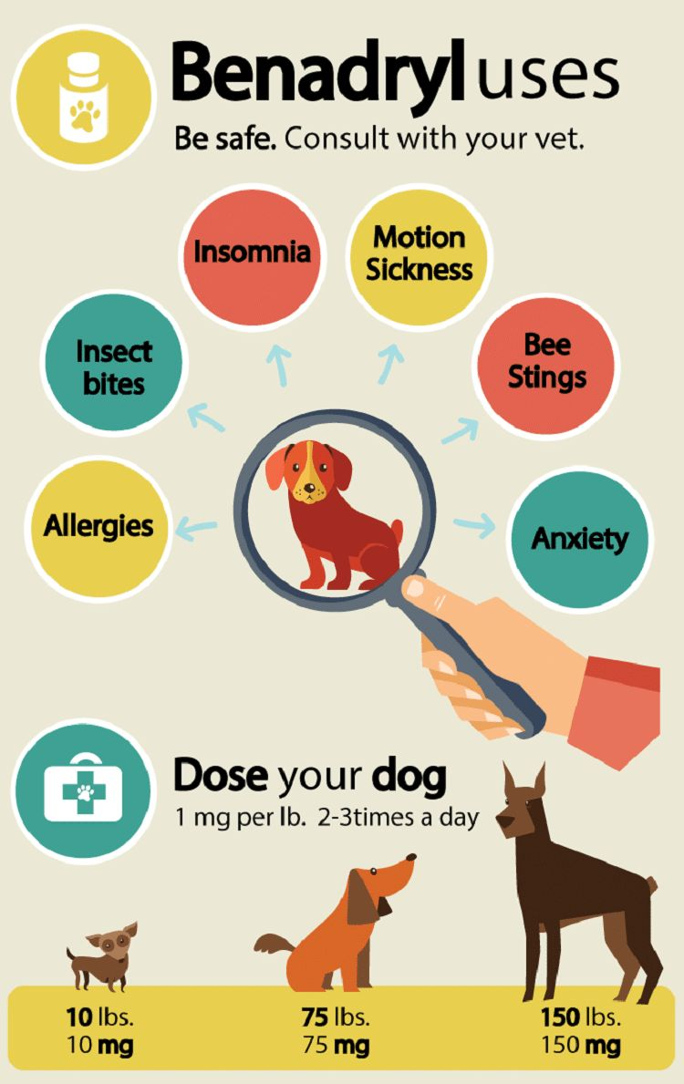 Poison ivy sur les chiens: apprendre à reconnaître les signes et les symptômes