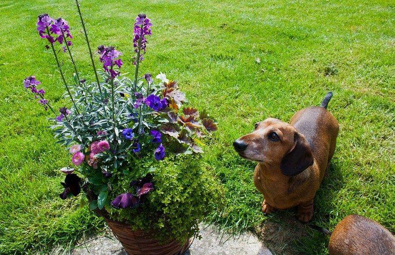 Plantes toxiques pour les chiens: apprendre à protéger votre chien dans la nature