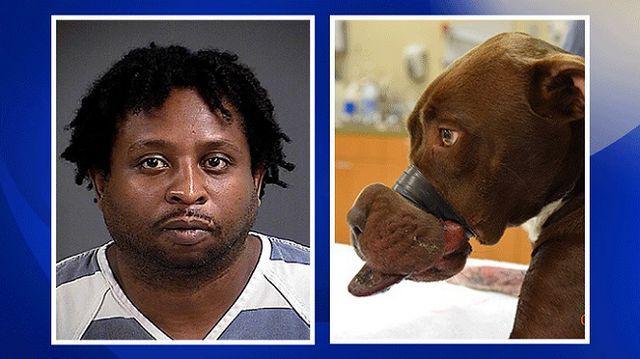 La police arrête l`homme accusé d`taping caitlyn museau de fermeture de du chien