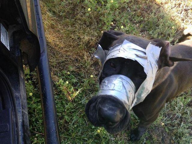Police demandant de l`aide pour trouver le propriétaire conduit-enregistré chien