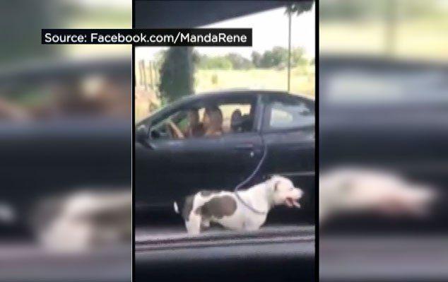 La police à la recherche de femme `marche` chien pendant que vous conduisez une voiture