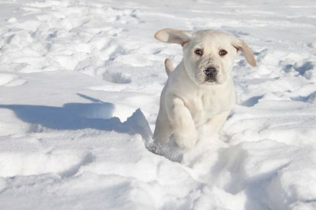 Préparation de votre chien à jouer dans la neige