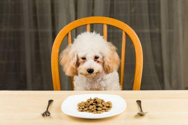 Problèmes avec votre nourriture pour animaux de compagnie? Vous devez le signaler! Voici comment: