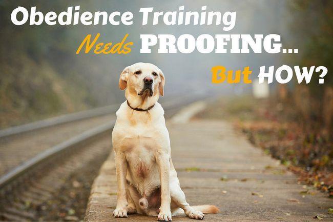 Proofing votre formation labrador est essentiel - pourquoi et comment?