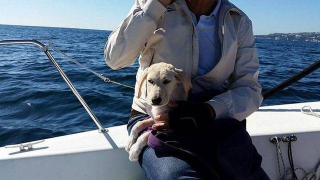 Puppy perdu en mer, les marins italiens à la rescousse