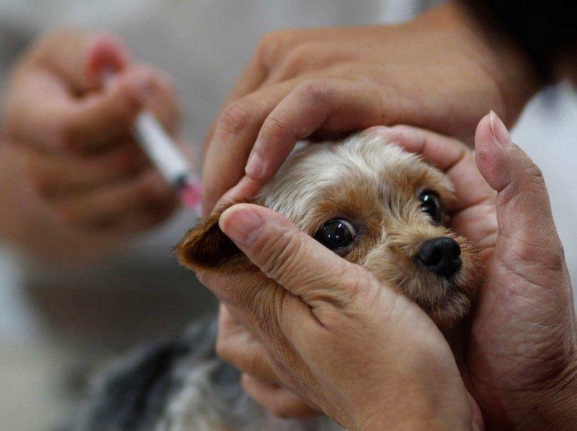 vaccination Dog