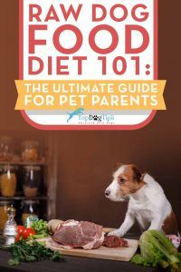 Raw Dog Food Diet pour chiens 101