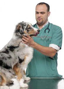 Sciences sur Raw régimes pour chiens