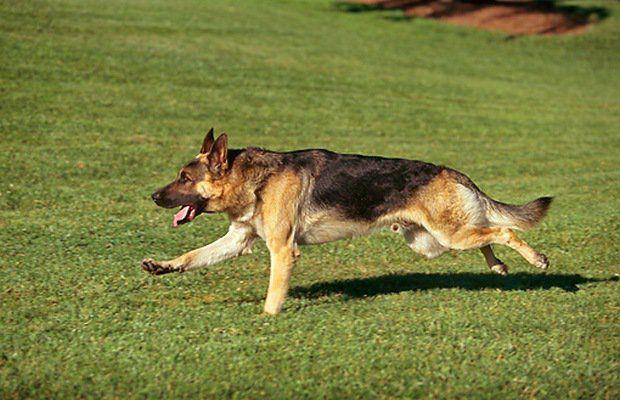 Performance Raw Offres des propriГ©taires de chiens une alternative beaucoup plus saine Г Kibble Commercial