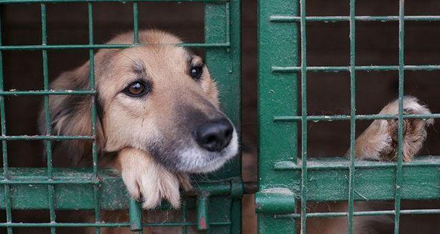 Chien dans un refuge pour chiens