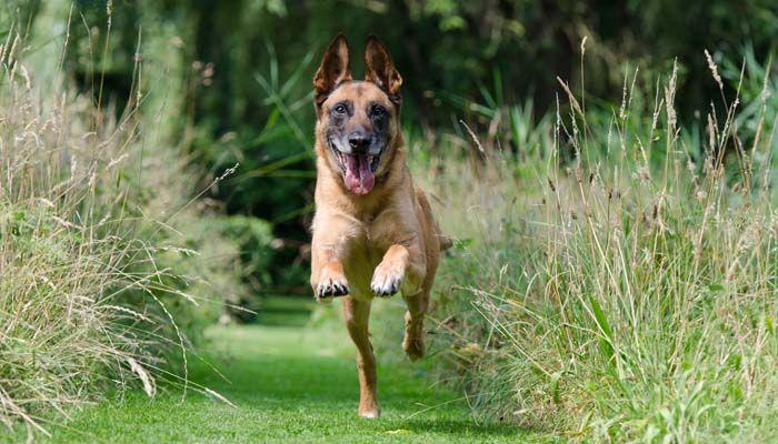 Rappelons commande de base et de la façon d`enseigner à votre chien