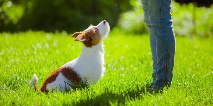 Rappel de base de commandement et Comment enseigner à votre chien