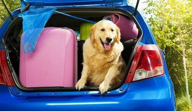 Déménager chiens: faire un endroit étrange moins étrange