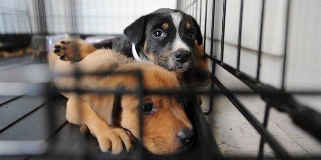 chiens sauvés de ogden médicaments buste ont encore besoin pour toujours maisons