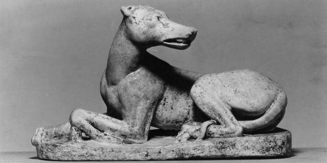 Les chercheurs peuvent avoir trouvé l`origine de tous les chiens