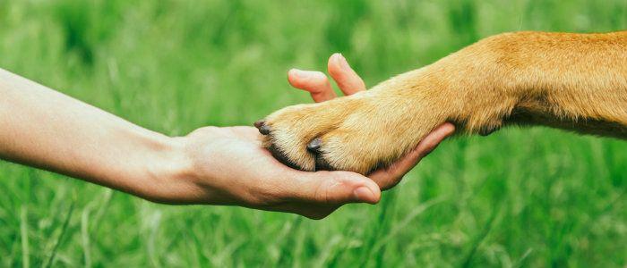 Respectez votre fido: l`équipement de formation de chien humain