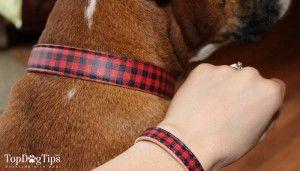 Review: matching amitié collier pour chiens