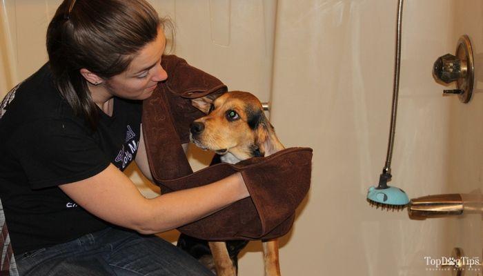 Review: territoire d`origine serviette de poche pour les chiens