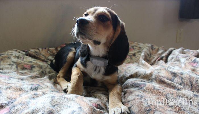 Review: col spot pour les chiens - pas de solution barrière invisible de choc