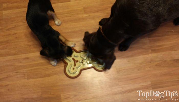 Le Guzzle Museau Dog lente Feeder Review
