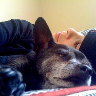 Sarah Silverman messages touchant hommage à son chien âgé