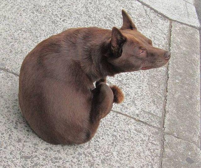 Meilleur traitement de puces pour chiens 2
