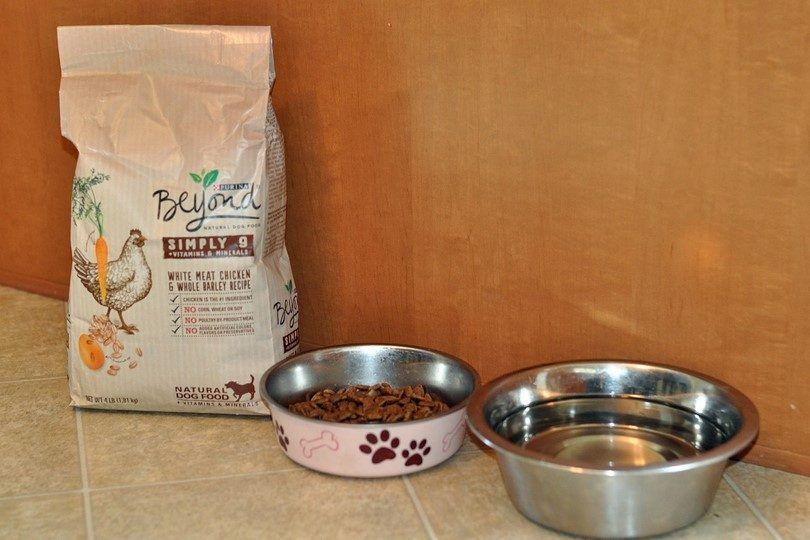 Purina au-delà de la nourriture pour chiens