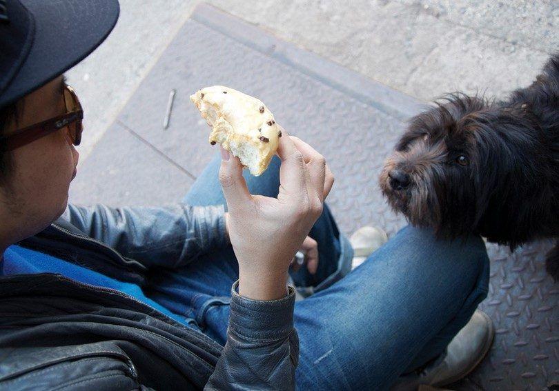 La nourriture est mauvaise pour les chiens