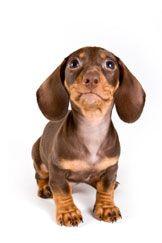 L`anxiété de séparation chez votre chien