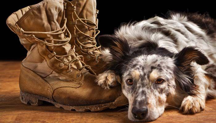 Service de trains de chien incontournables: ce qui est plus important pour les propriétaires?