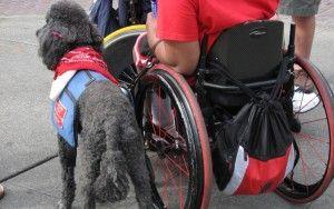 Les chiens d`assistance: ce que vous devez savoir
