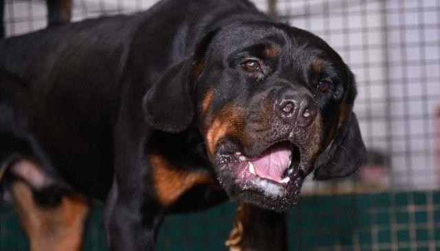 Abri accident de chien: comment un animal tué son nouveau propriétaire