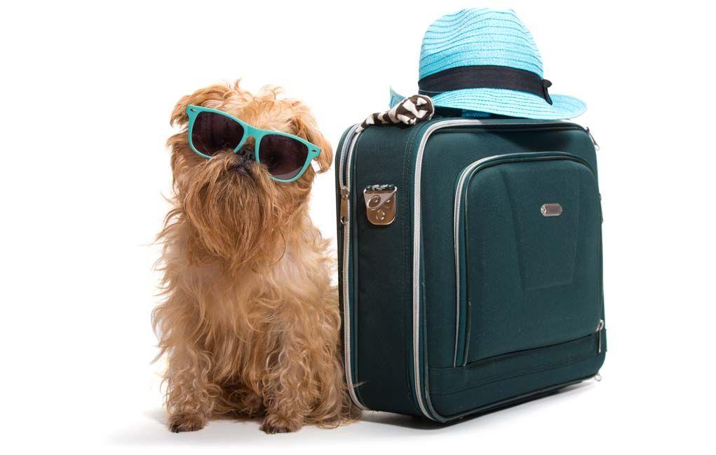 Expédition un chien: la terre contre le transport aérien
