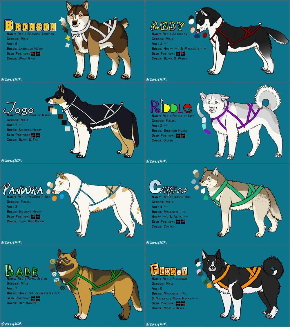races de chiens de traîneau: chiens extraordinaires qui aiment un peu de travail dans la neige