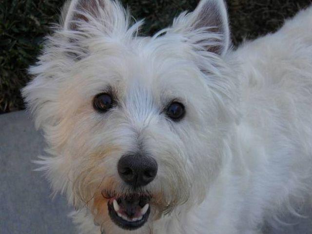 Sourire! Quel est le meilleur dentifrice de chien sur le marché?
